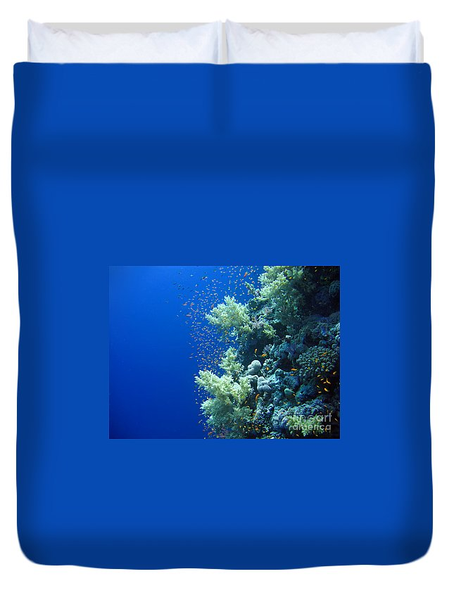 Background Duvet Cover featuring the photograph Underwater Landscape by MotHaiBaPhoto Prints