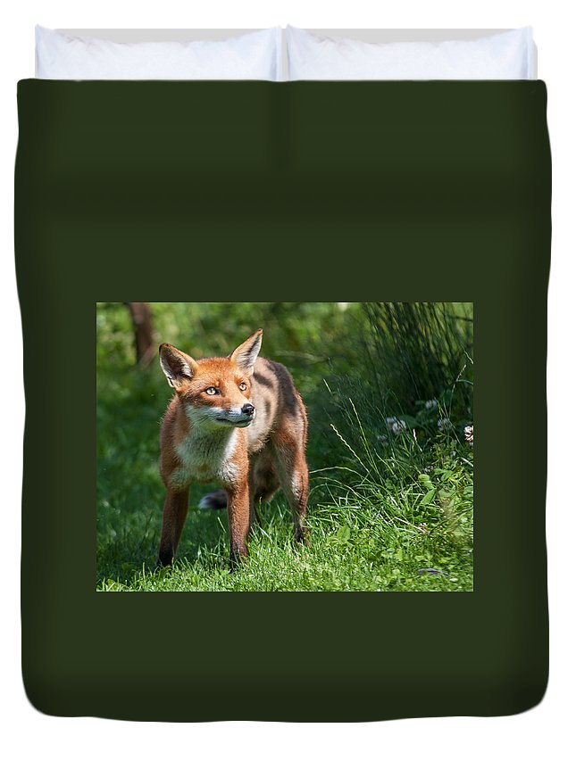 British Wildlife Centre Duvet Cover featuring the photograph A British Red Fox by Dawn OConnor