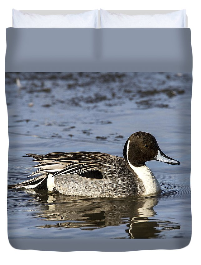 Doug Lloyd Duvet Cover featuring the photograph Northern Pintail by Doug Lloyd