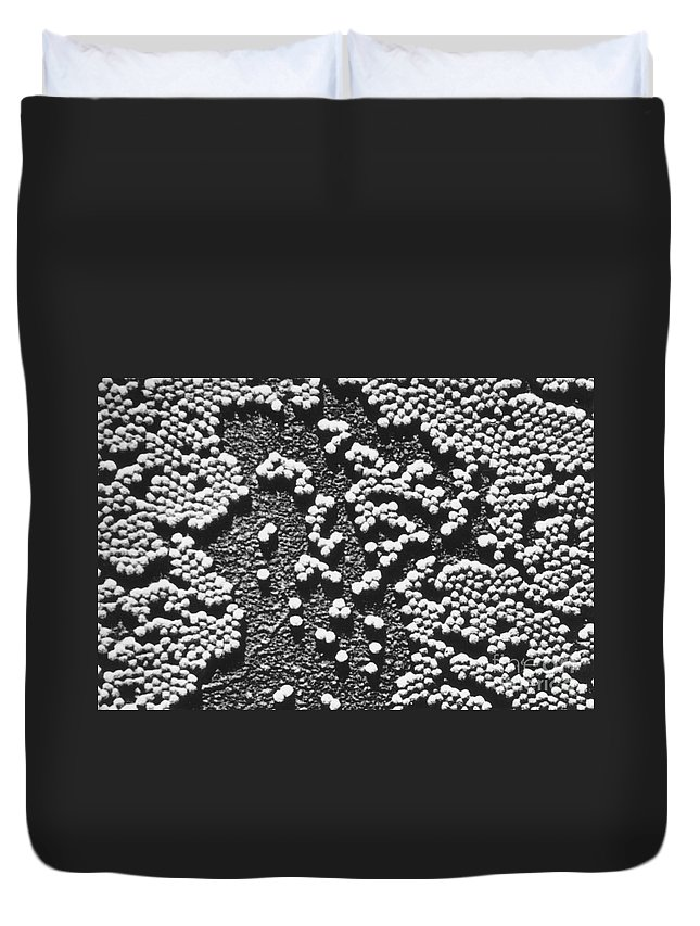Science Duvet Cover featuring the photograph Polio Virus, Tem by Omikron