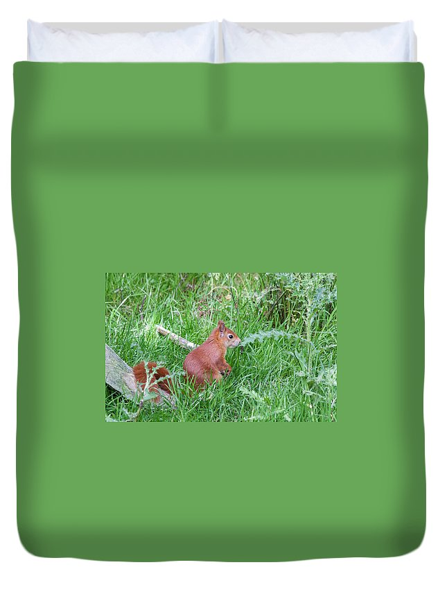 Red Squirrel Duvet Cover featuring the photograph Red Squirrel by Dawn OConnor