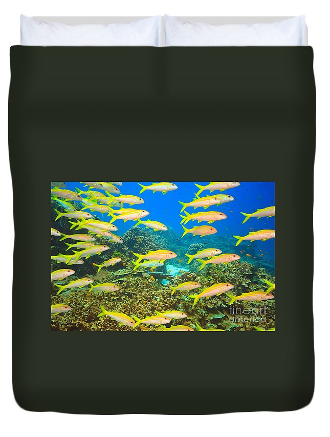 Andaman Sea Duvet Cover featuring the photograph School Of Yellowfin Goatfish by MotHaiBaPhoto Prints