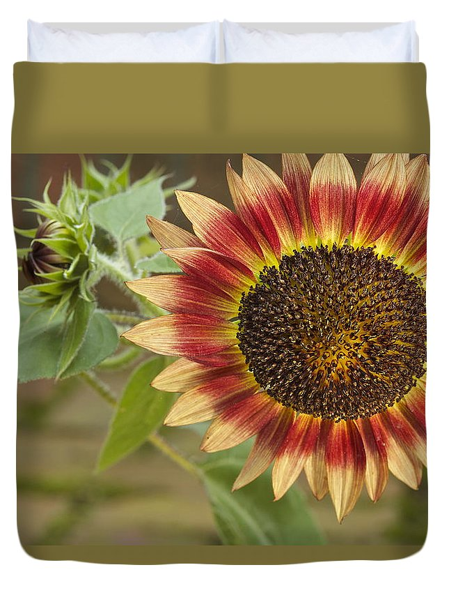 Agriculture Duvet Cover featuring the photograph Sunflower by Jack R Perry
