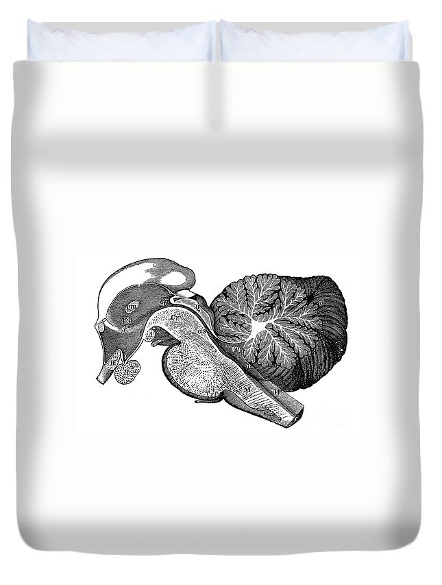 Ventricle Duvet Cover featuring the photograph Third And Fourth Ventricles Of The Brain by Science Source