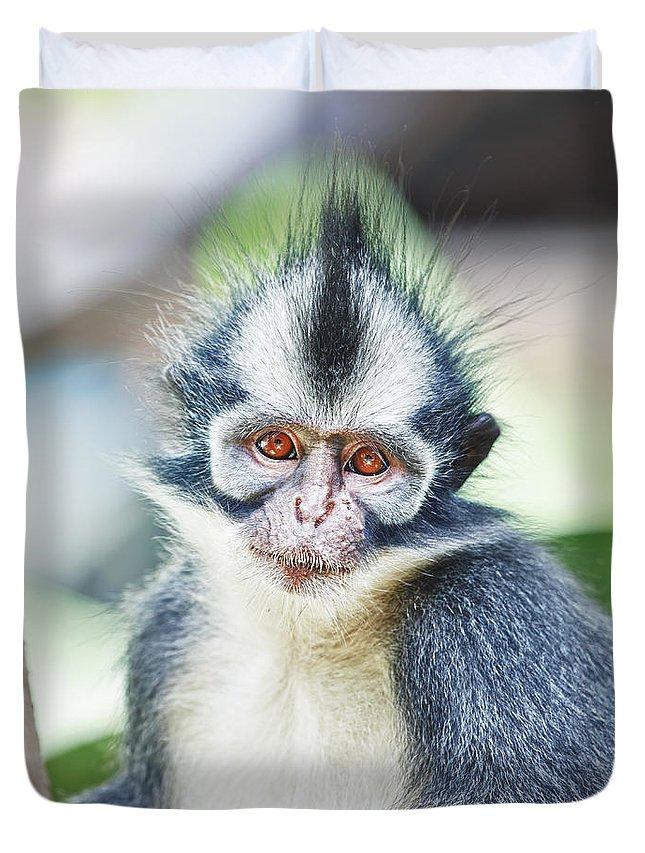Thomas's Duvet Cover featuring the photograph Thomas's Leaf Monkey by MotHaiBaPhoto Prints
