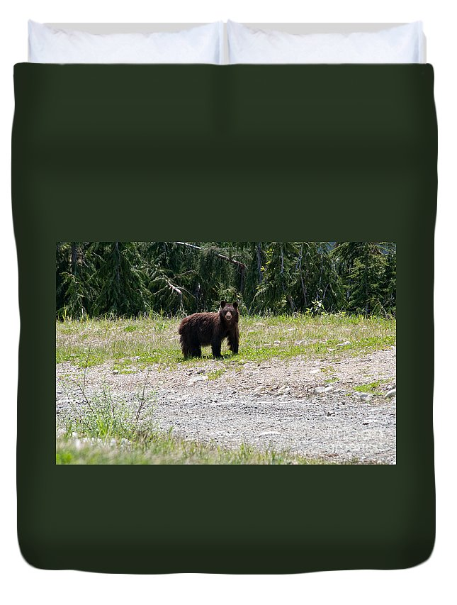 Animals Duvet Cover featuring the digital art Black Bear by Carol Ailles