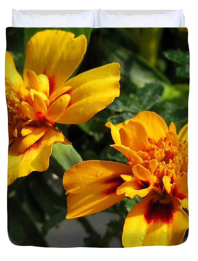 French Marigold Duvet Cover featuring the photograph French Marigold Named Starfire by J McCombie