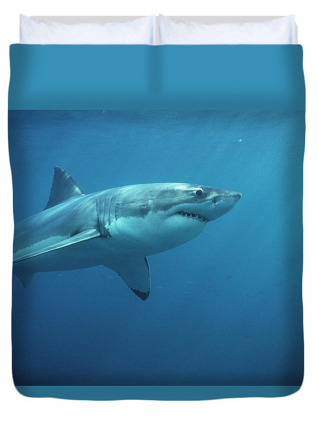 Mp Duvet Cover featuring the photograph Great White Shark Carcharodon by Mike Parry