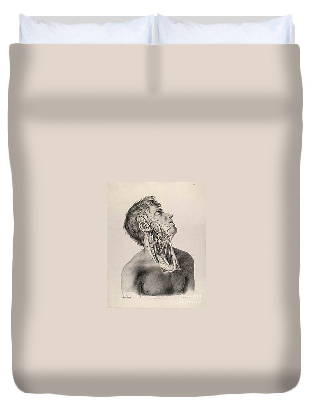 Anatomy Of Arteries Duvet Cover featuring the photograph Historical Anatomical Illustration by Science Source