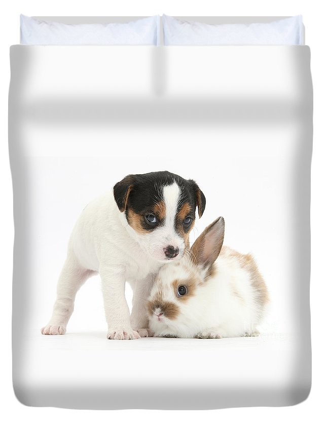 Jack Russell Terrier Puppy And Baby Duvet Cover