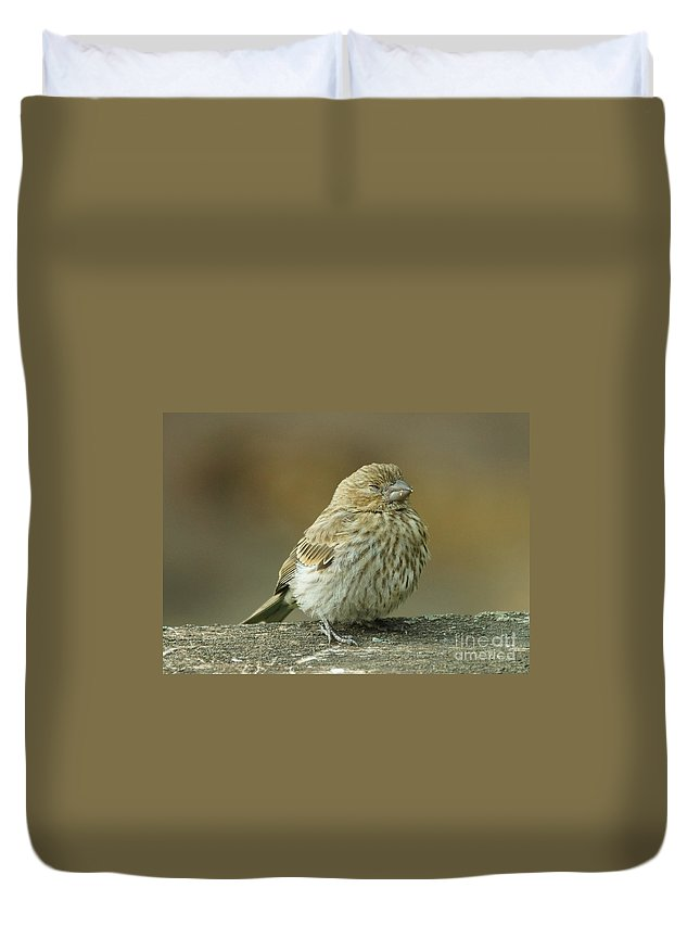 House Finch Duvet Cover featuring the photograph Nap Time by Lori Tordsen