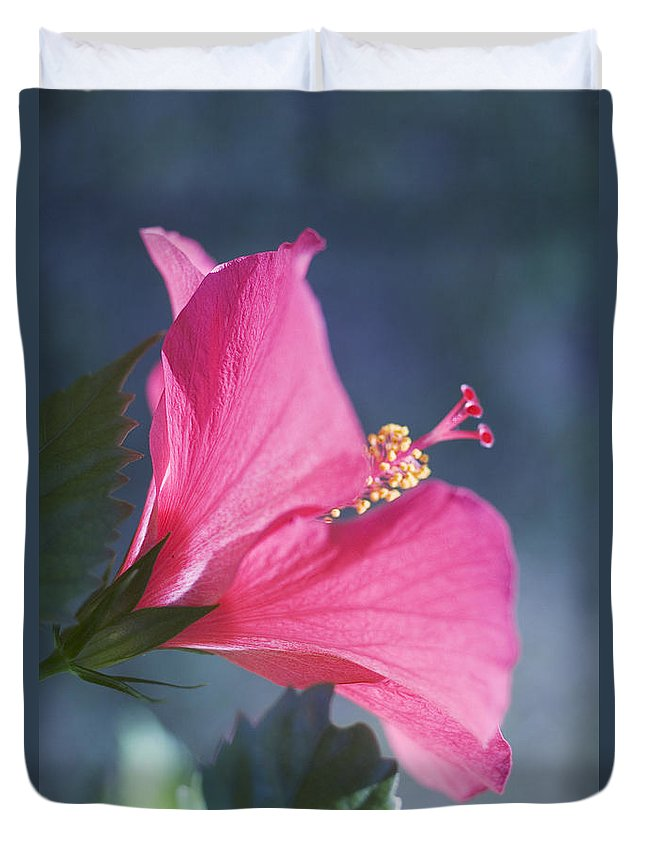 Above Duvet Cover featuring the photograph Pink, Blue And Green by Mary Van de Ven - Printscapes