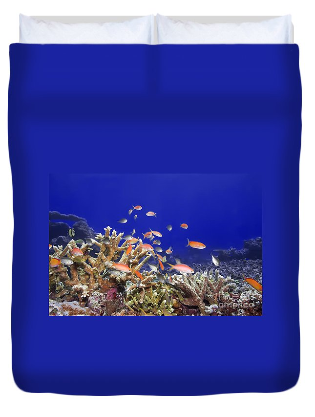 Animal Duvet Cover featuring the photograph Underwater World by MotHaiBaPhoto Prints