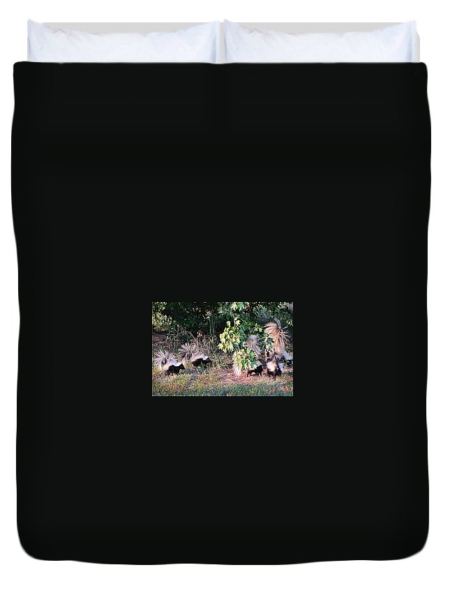 Skunks Duvet Cover featuring the photograph 4 Little Stinkers by Kathy Clark