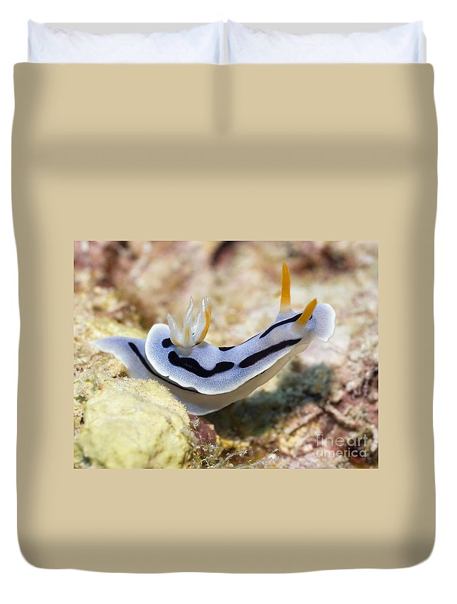 Nudibranch Duvet Cover featuring the photograph Nudibranch by MotHaiBaPhoto Prints