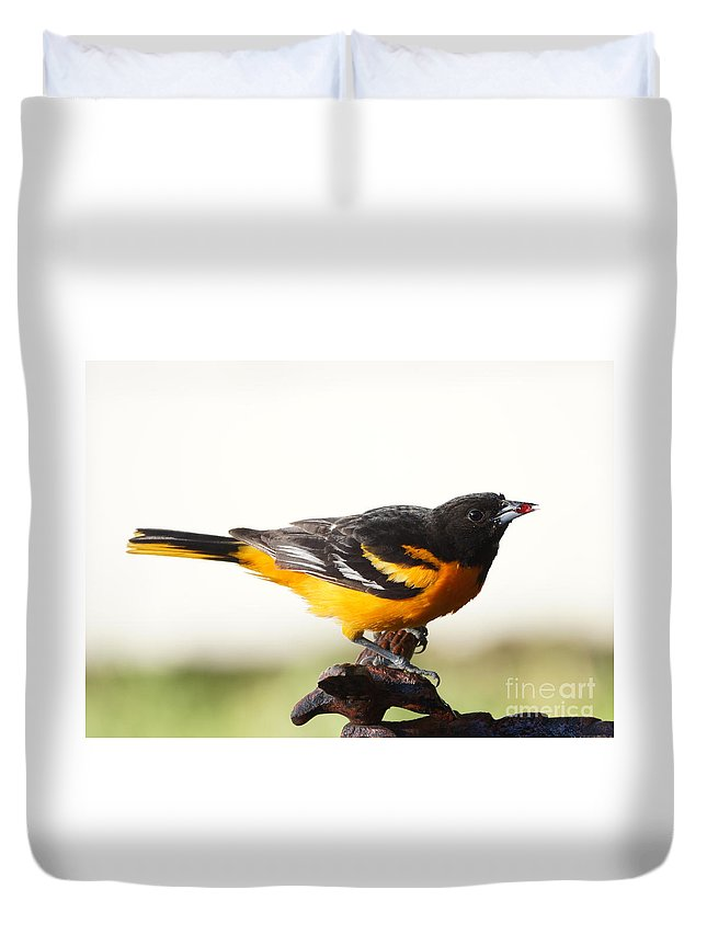 Orioles Duvet Cover featuring the photograph Oriole by Lori Tordsen