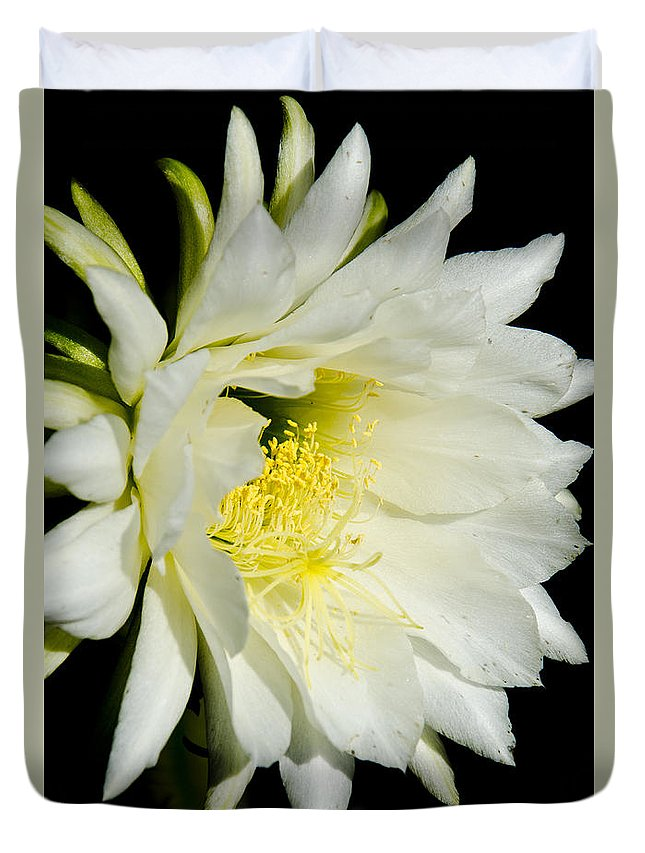 Cactus Duvet Cover featuring the photograph White Cactus Flower by Jim And Emily Bush