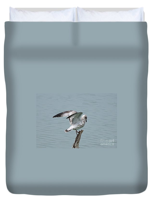 Seagull Duvet Cover featuring the photograph Wing Test by Lori Tordsen