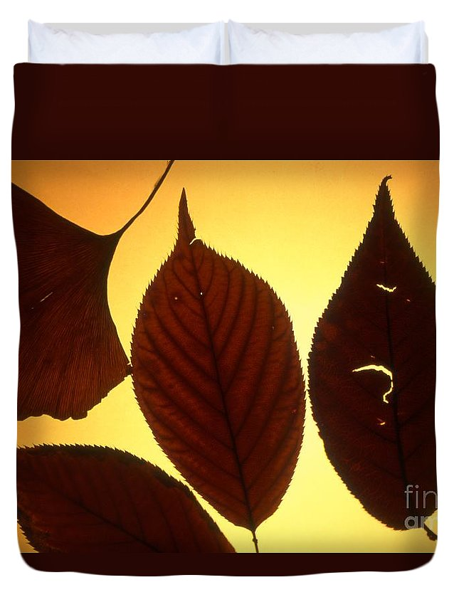 Color Duvet Cover featuring the photograph 5 Autumn Leaves by Tamarra Tamarra