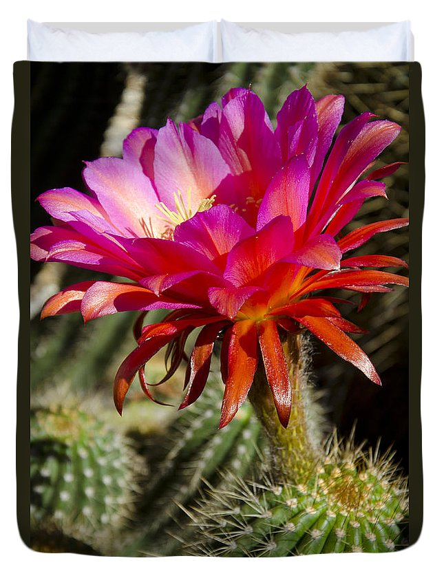 Red Duvet Cover featuring the photograph Dark Pink Cactus Flower by Jim And Emily Bush