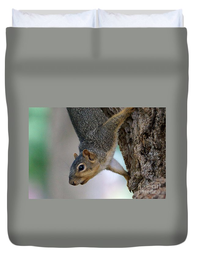Squirrel Duvet Cover featuring the photograph Hanging Around by Lori Tordsen