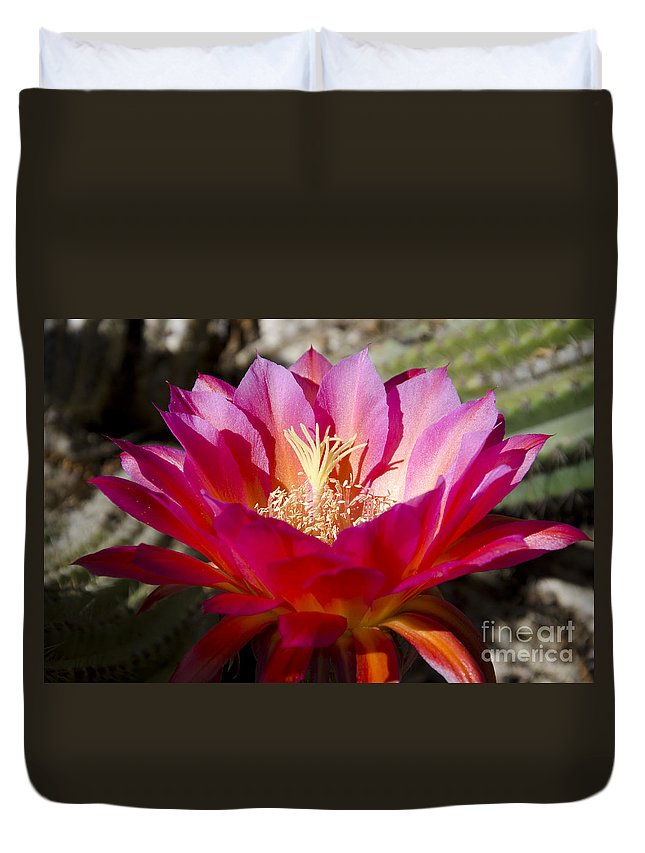 Pink Duvet Cover featuring the photograph Dark Pink Cactus Flower by Jim And Emily Bush