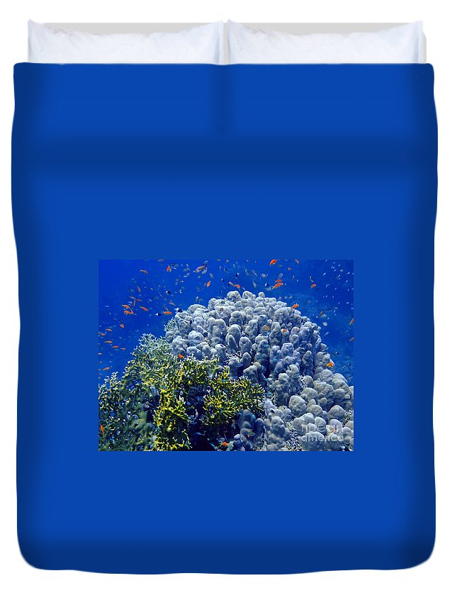 Animal Duvet Cover featuring the photograph Underwater Landscape by MotHaiBaPhoto Prints
