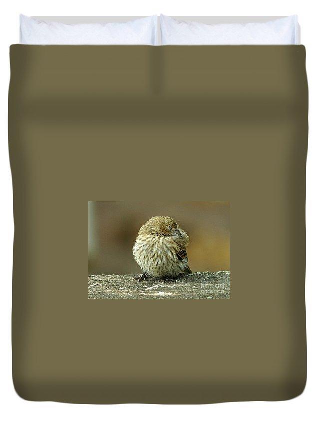 House Finch Duvet Cover featuring the photograph House Finch by Lori Tordsen