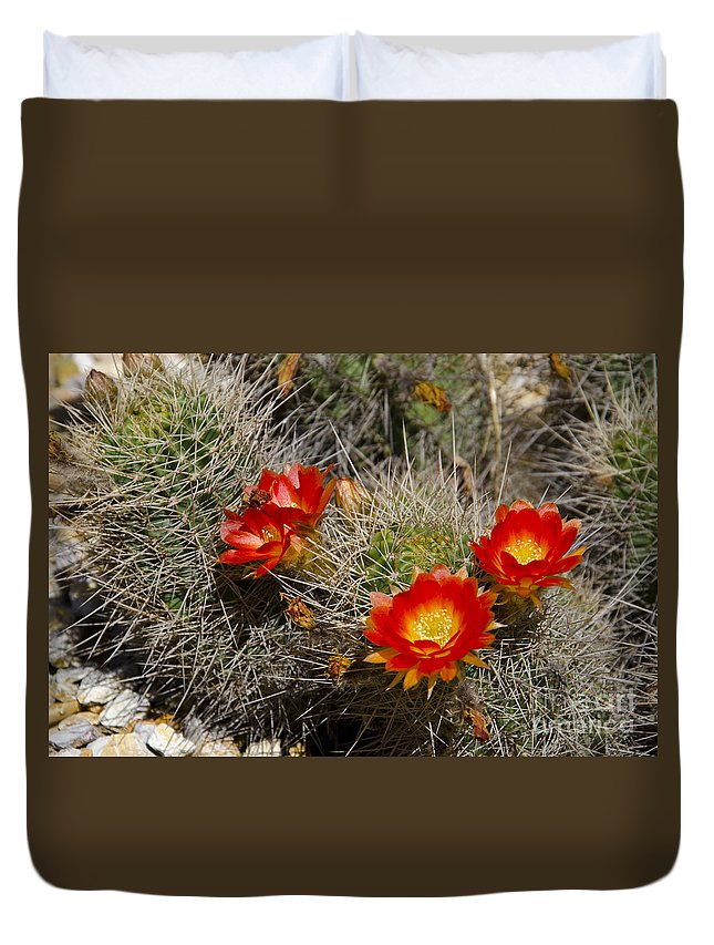 Red Duvet Cover featuring the photograph Red Cactus Flowers by Jim And Emily Bush