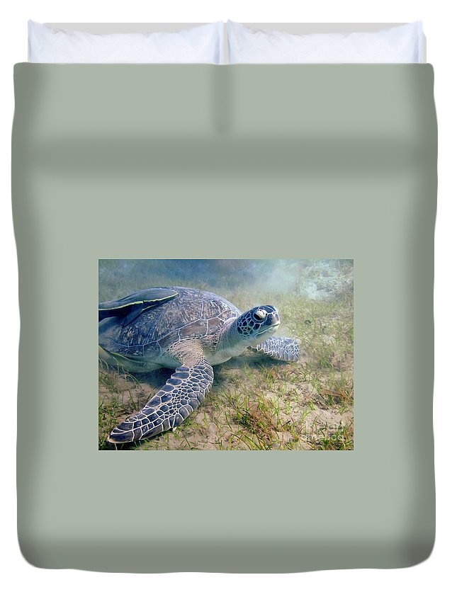 Turtle Duvet Cover featuring the photograph Turtle by MotHaiBaPhoto Prints