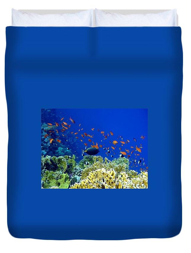 Surgeonfish Duvet Cover featuring the photograph Underwater Landscape by MotHaiBaPhoto Prints
