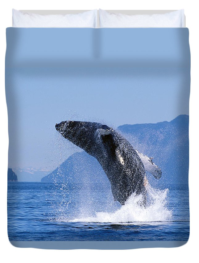 Active Duvet Cover featuring the photograph Humpback Whale Breaching by John Hyde - Printscapes