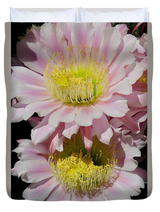 Pink Duvet Cover featuring the photograph Pink Cactus Flowers by Jim And Emily Bush