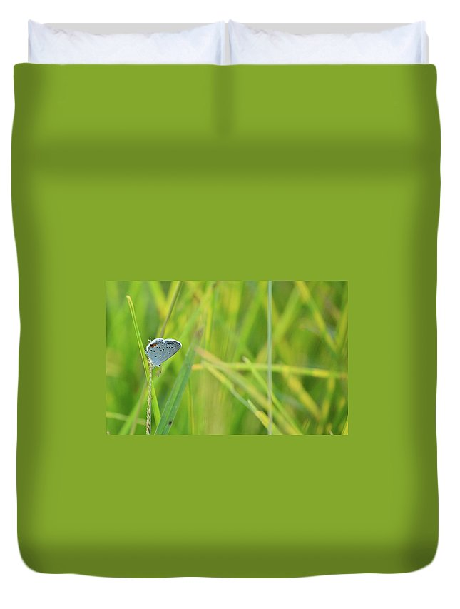 Eastern Tailed Blue Duvet Cover featuring the photograph A Blue And Grass by JD Grimes