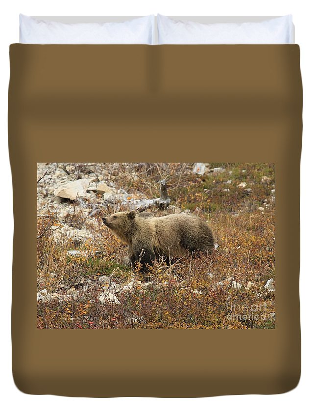 Grizzly Bear Duvet Cover featuring the photograph A Breath Of Fresh Air by Adam Jewell