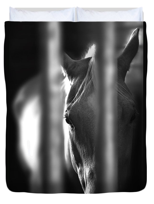 Horse Duvet Cover featuring the photograph A Champ In Retirement by Greg Sharpe