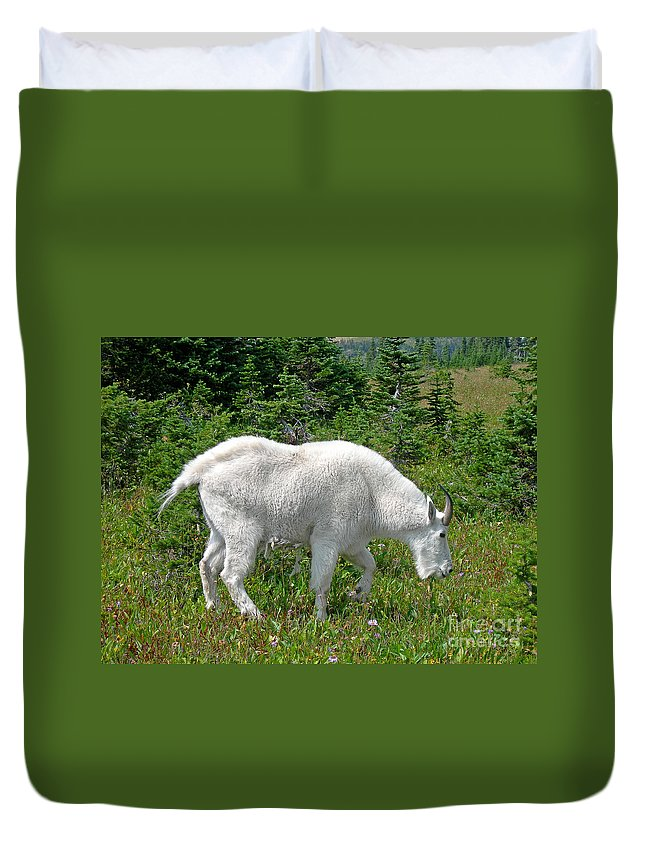 Scenic Duvet Cover featuring the photograph A Goat In The Meadow by Jim Chamberlain