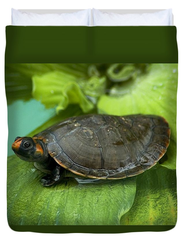 A Red Headed Amazon River Turtle Duvet Cover For Sale By Nicole Duplaix