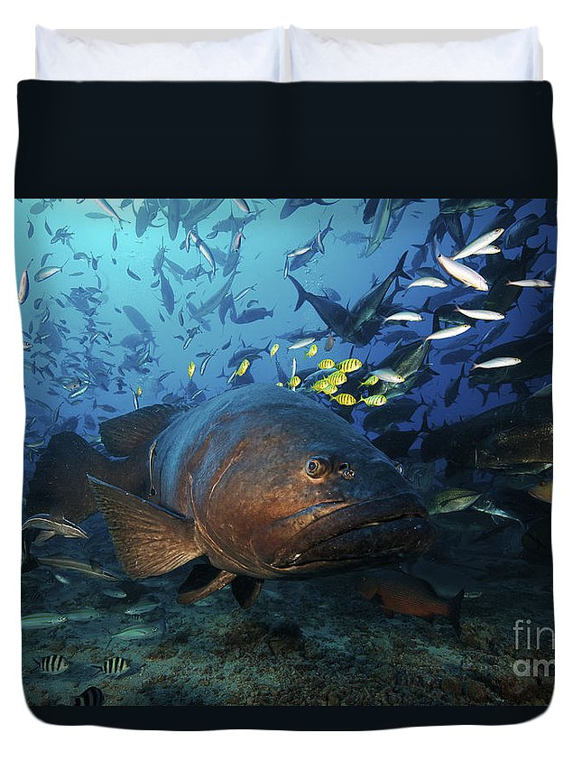Giant Trevally Duvet Cover featuring the photograph A School Of Golden Trevally Follow by Terry Moore