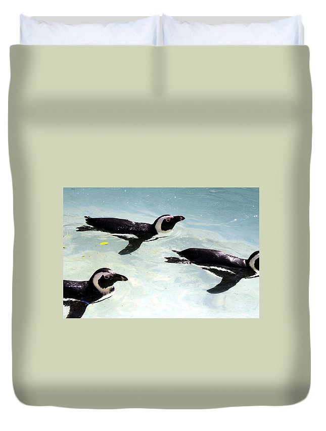 Penguins Duvet Cover featuring the photograph A Small Squadron Of Swimming Penguins by Heather Lennox
