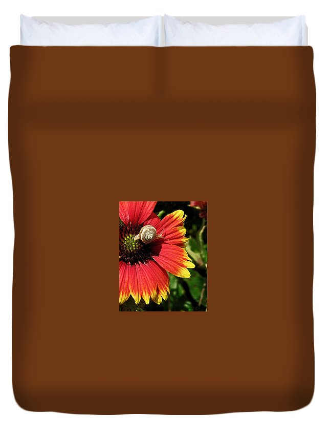 Nature Duvet Cover featuring the photograph A Snail's Pace by Peg Urban