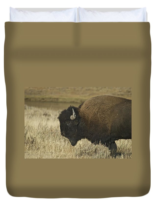 Bison Duvet Cover featuring the photograph A Yellowstone Bison 9615 by Michael Peychich
