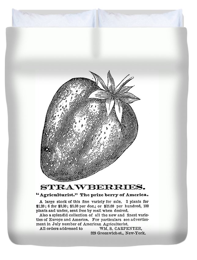 19th Century Duvet Cover featuring the photograph Advertisement: Strawberry by Granger