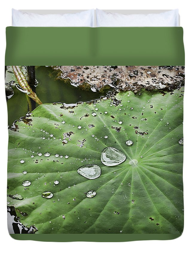Lily Duvet Cover featuring the photograph After The Rain by Douglas Barnard