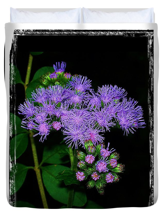 Ageratum Duvet Cover featuring the photograph Ageratum by Judi Bagwell