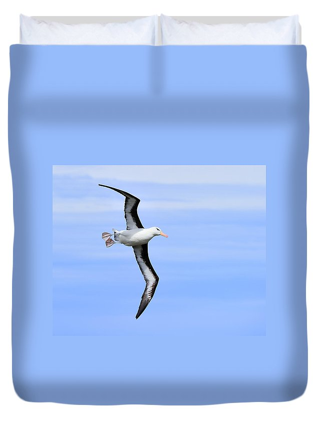 Black-browed Albatross Duvet Cover featuring the photograph Air Breaks by Tony Beck