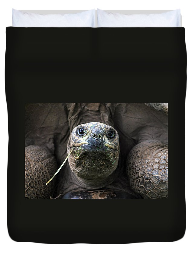 Turtle Duvet Cover featuring the photograph Aldabra Tortoise by CJ Clark