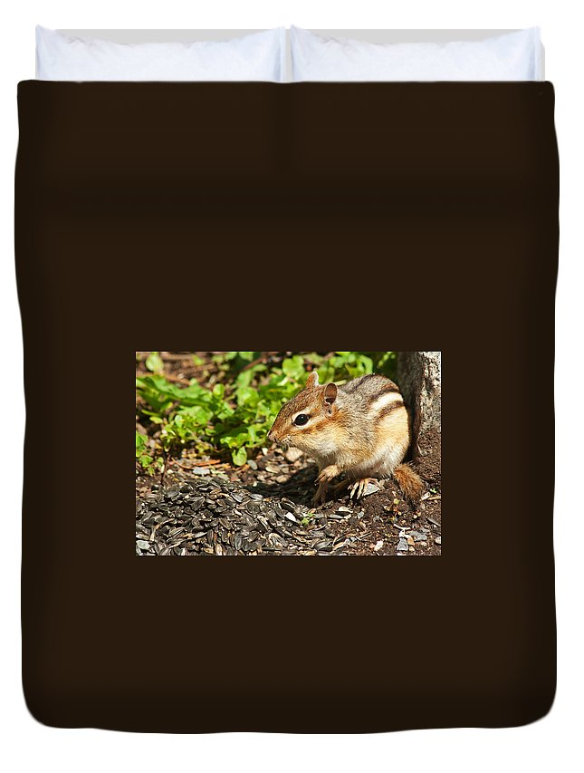 Chipmunk Duvet Cover featuring the photograph All For Me by Jeff Galbraith