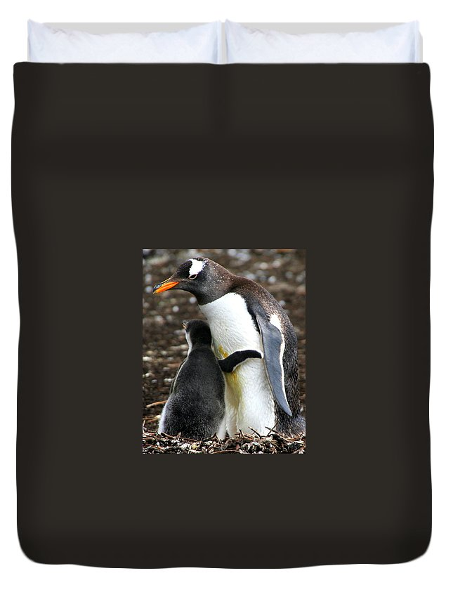 Gentoo Duvet Cover featuring the photograph All I Need Is A Hug by Laurel Talabere