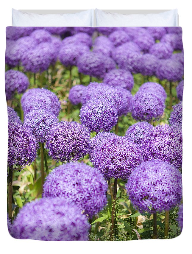 Giant Duvet Cover featuring the photograph Allium Flower At The Boston Common by Jiayin Ma